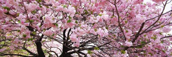 """Приглашаем вас в """"Японский сад"""""""